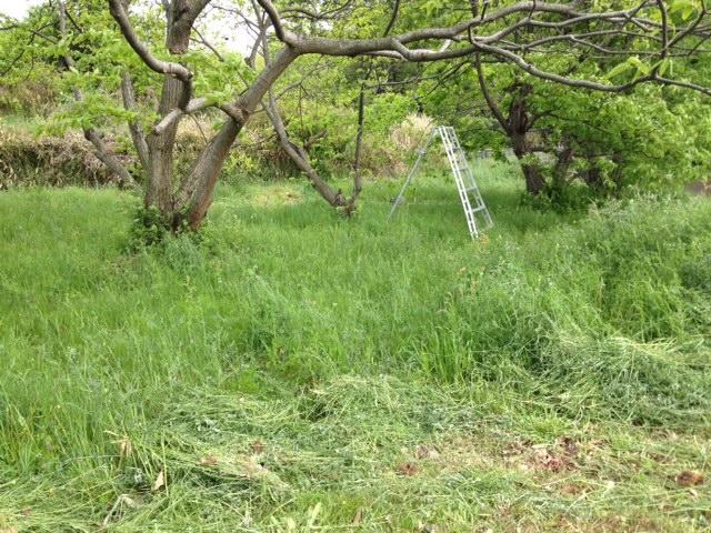 草刈り二日目