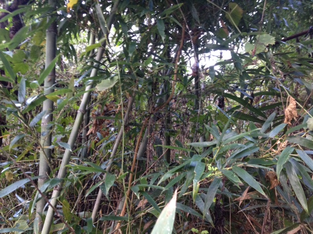 厄介な竹・笹
