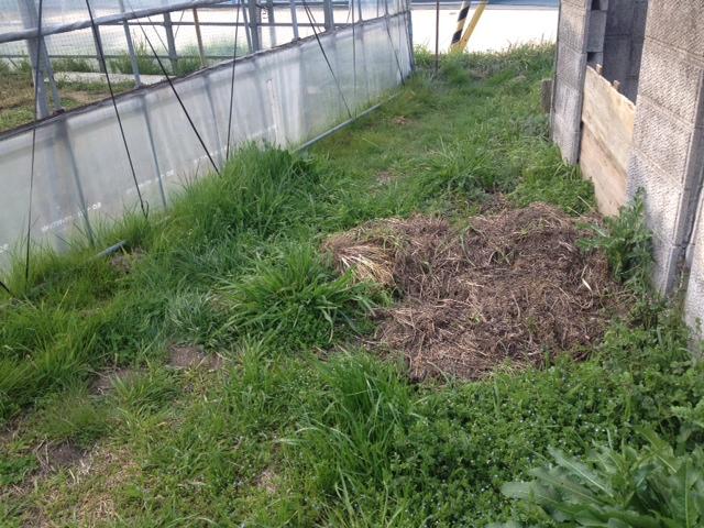 昨日の続きで草刈り