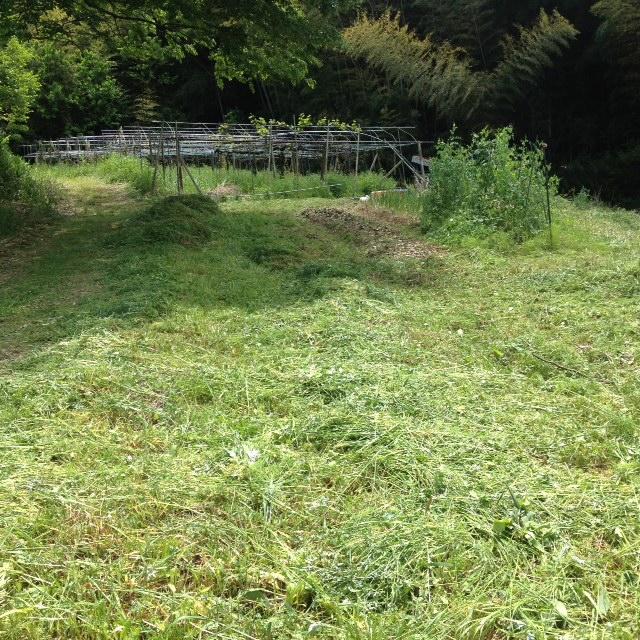 夏野菜エリアをやっと草刈