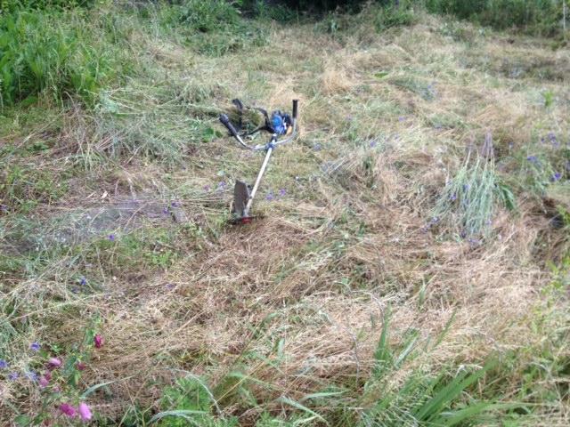 実家の庭の草刈り
