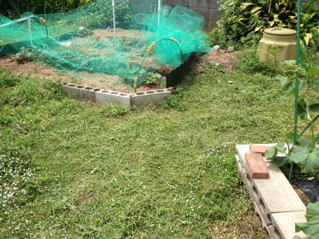 うちの庭も草刈り