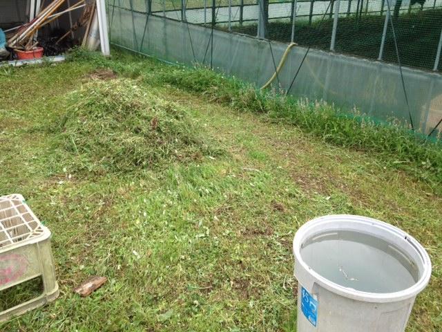 ハウス周囲の草刈り
