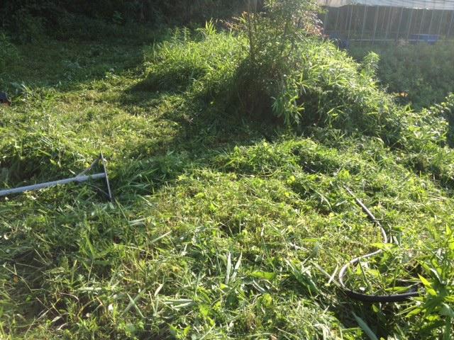 やっぱり草刈り