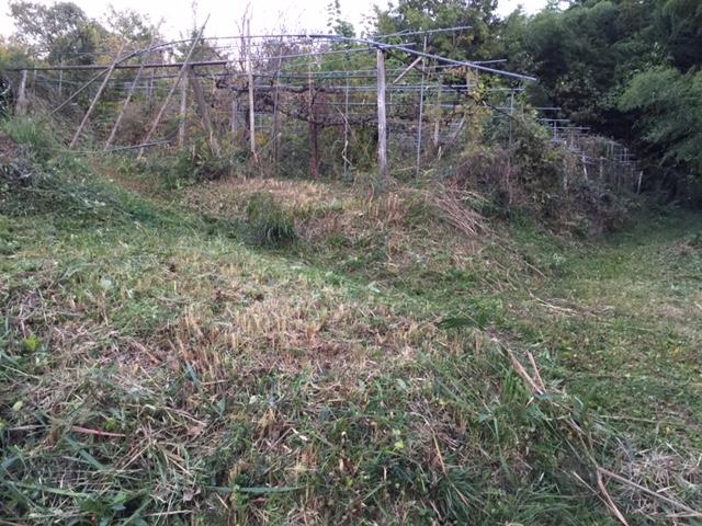 雑草の伸びが鈍くなった今こそ