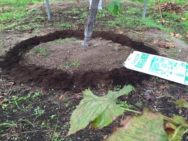 堆肥を撒き撒き