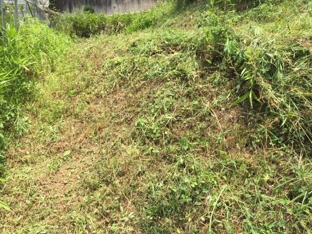 草刈り最前線