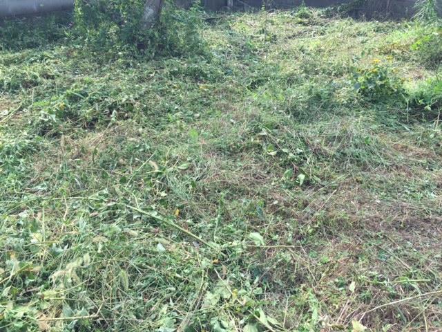 実家の庭も草刈り