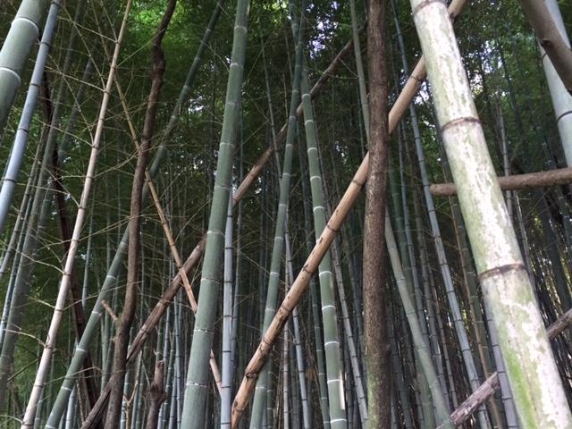 これが問題の竹林
