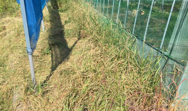 ハウス周りの草刈り