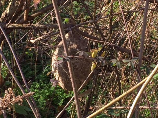 スズメバチ!の巣