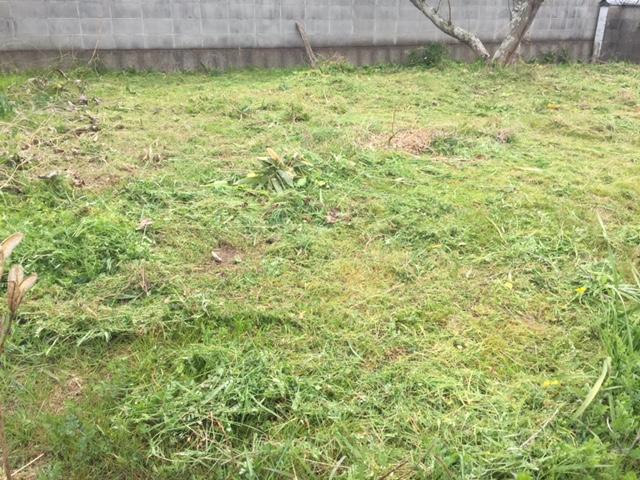 庭を草刈り
