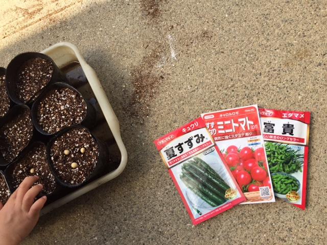 夏物種蒔き