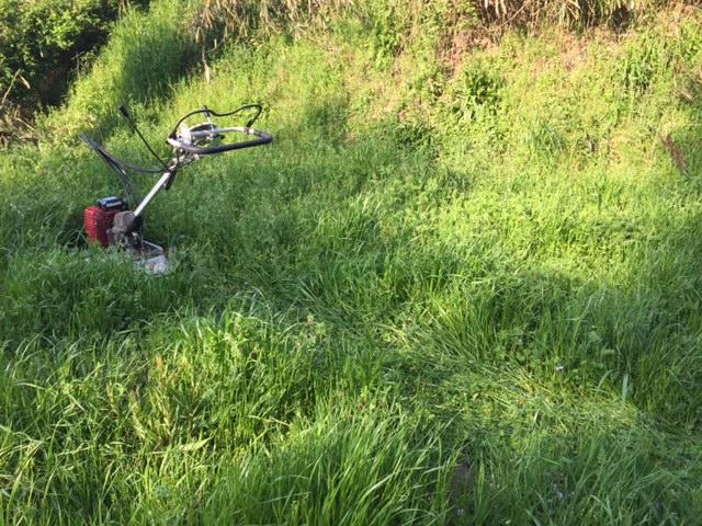 再び始まる草刈りの日々