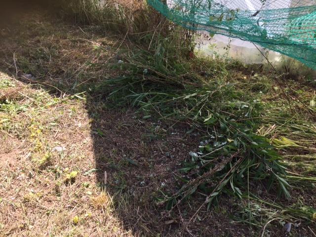 草刈り昨日の続きです