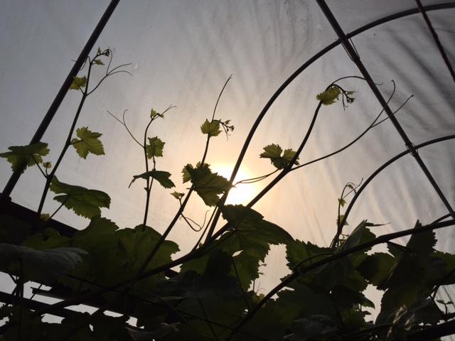 空へ空へと伸びる枝