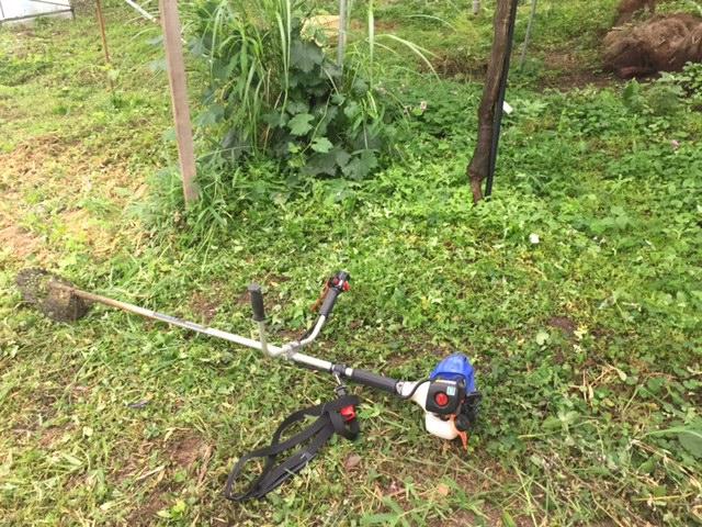 雨でも草刈り