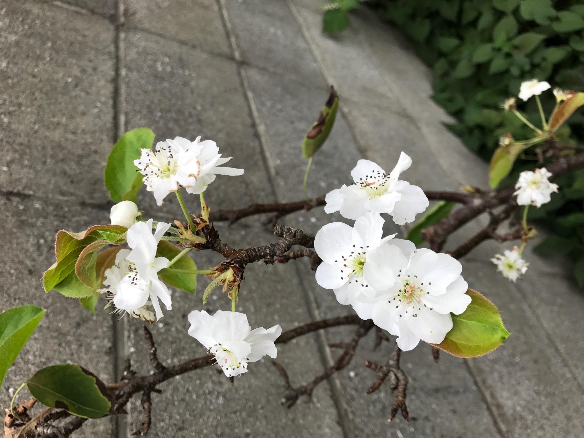 庭の花(続き