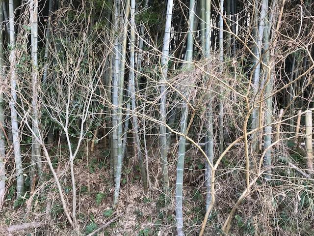 今日は竹林に挑戦