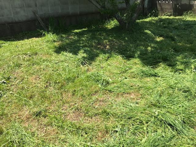 草刈りついでに