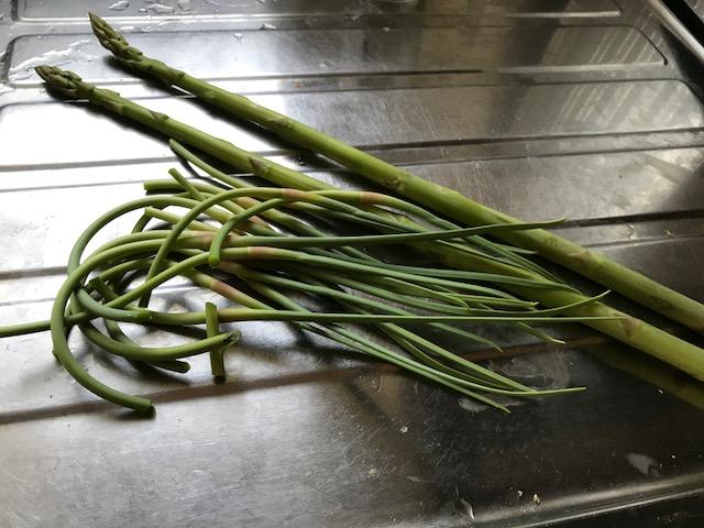 ニンニクの芽、収穫
