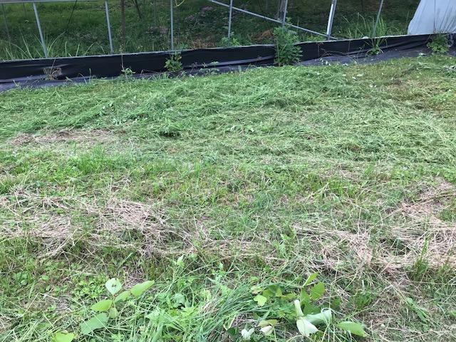防除の翌日は草刈り