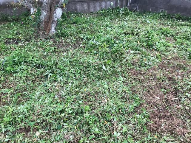 草刈りDay