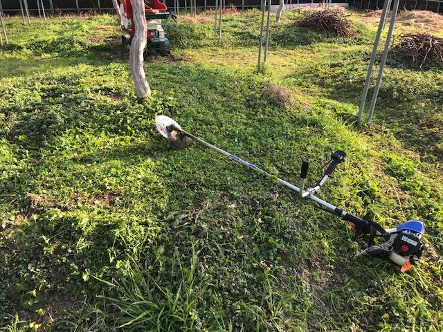 草刈りも始めます